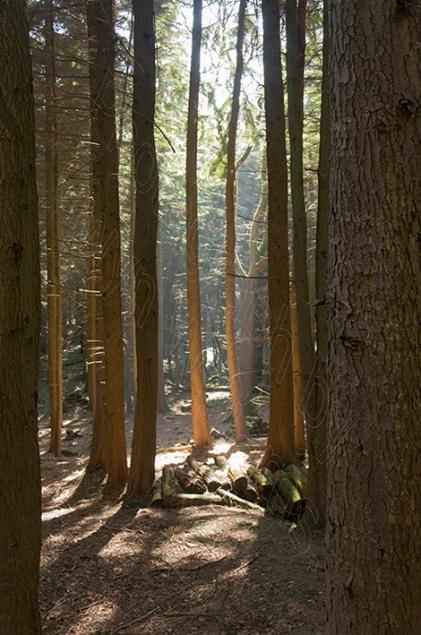 Gwaelod Trees